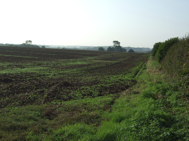 Field and hedgerow, Thornholme Field