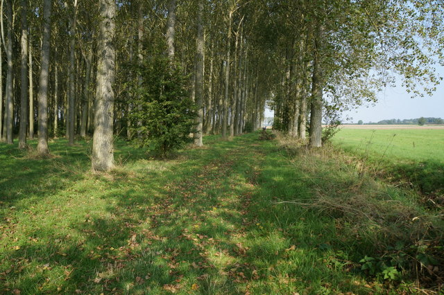 Path leading to Ashby Cum Fenby