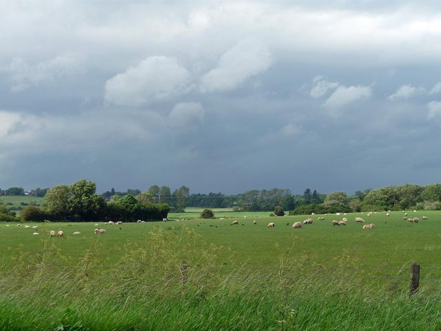 Farmland near Clipston