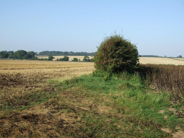 Farmland and hedgerow, Thornholme Field