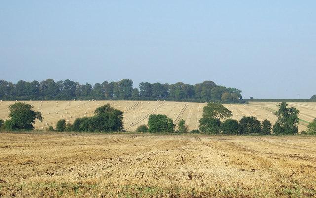Wolds farmland, Thornholme Field