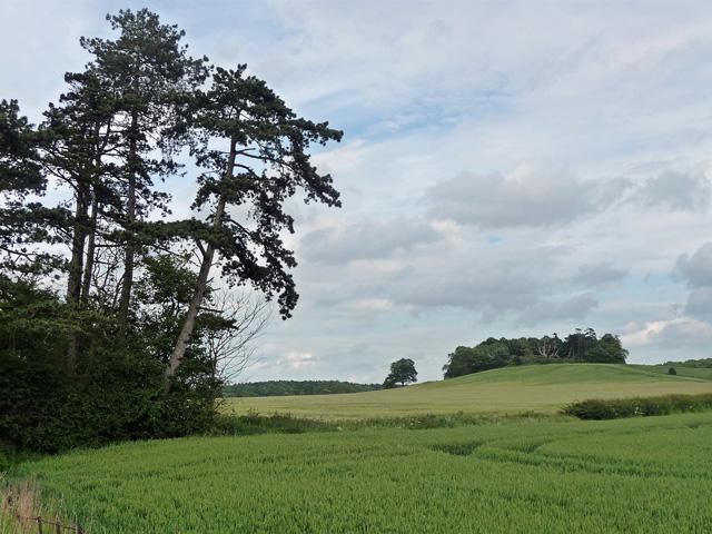 Farmland near Kelmarsh (1)