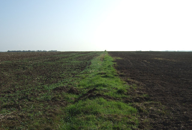 Field boundary, Thornholme Field