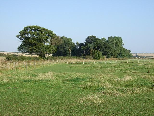 Grazing near Thornholme