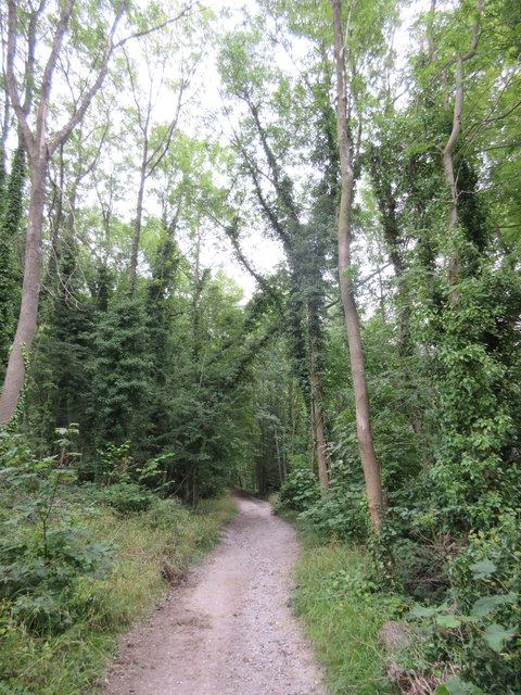 Bridleway in Great Church Wood