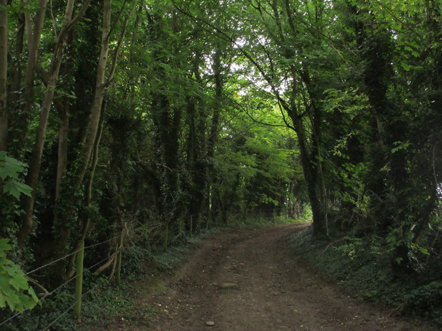 Bridleway to Marden Park Farm
