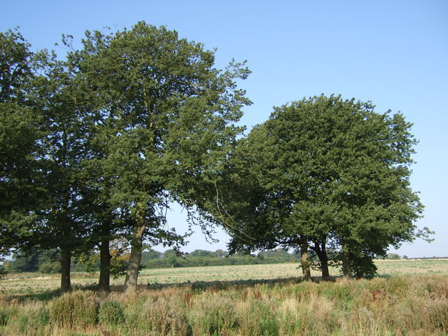 Trees in field