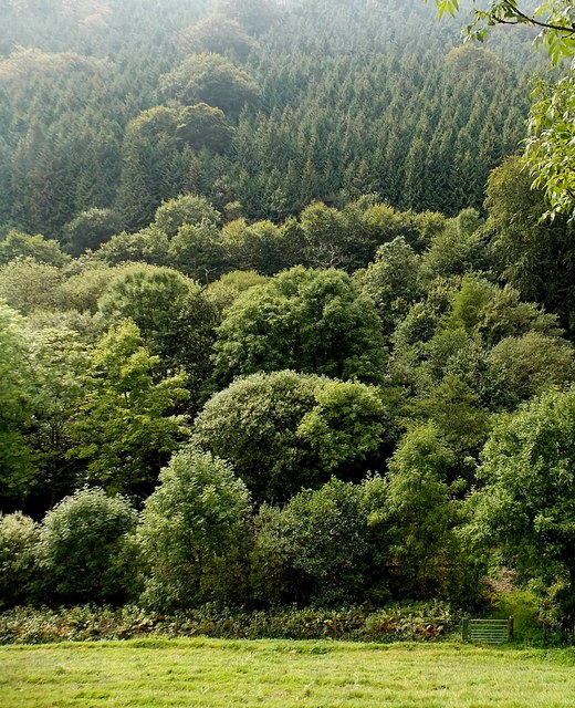 Trees above the Garw Valley
