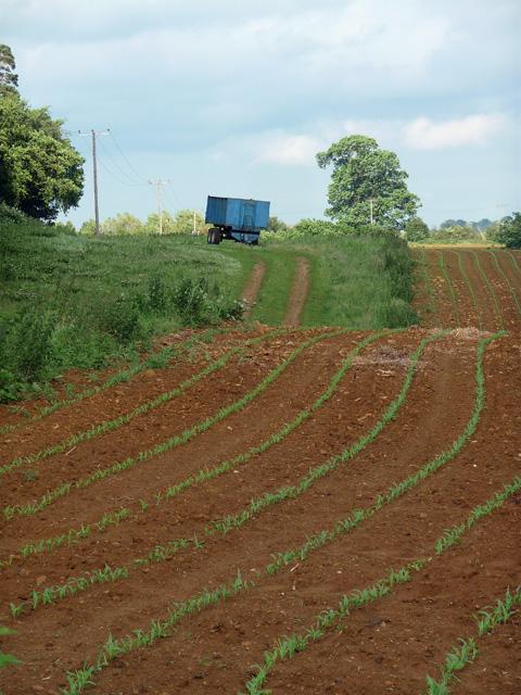 Farmland near Boughton