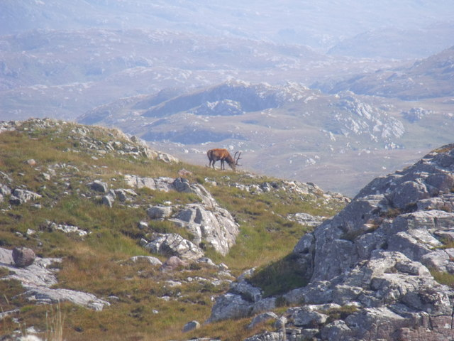 Stag on Cnoc Breac near Lochinver