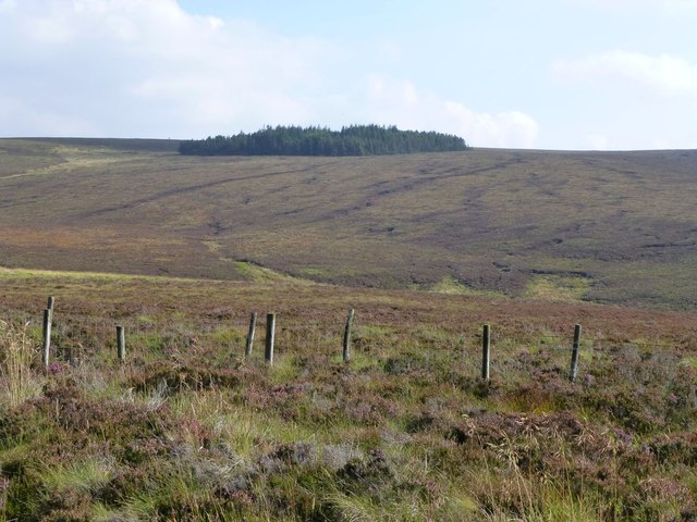 Diamond shaped forest on the moor
