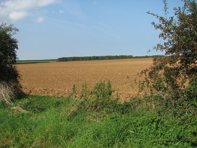Fields north of Docking