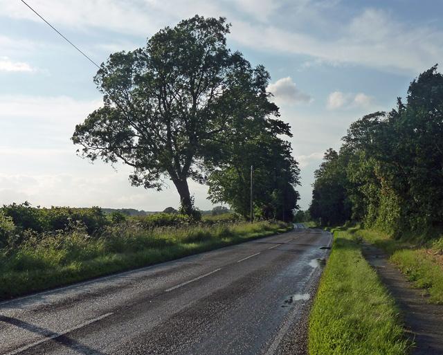 Country road near Stoke Goldington
