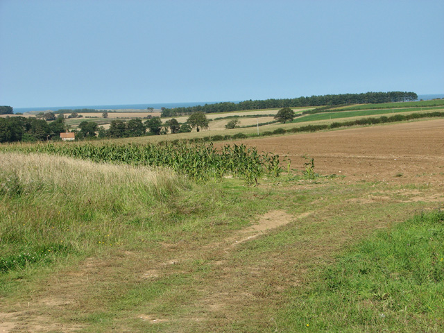 Fields by Westgate Farm