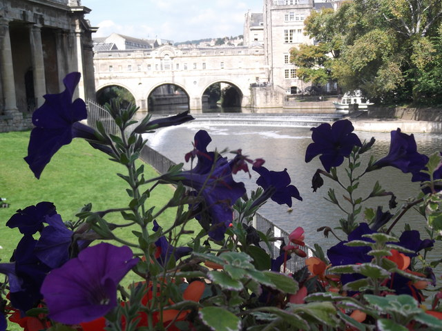 Pulteney Bridge through the flowers, Bath