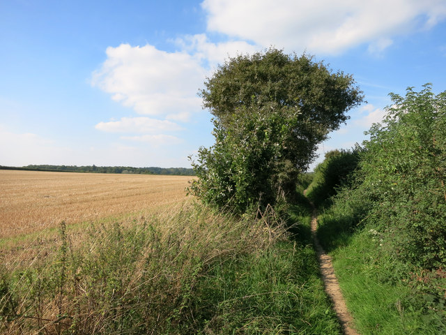 Path near Whitchurch Hill