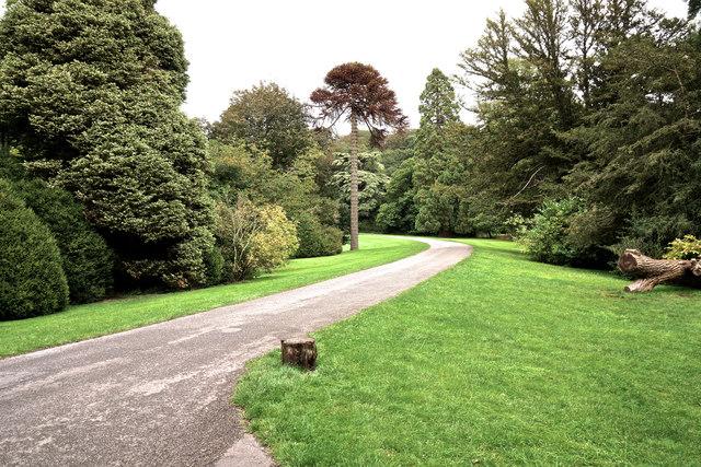 Tyntesfield driveway