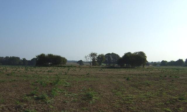 Farmland east of Back Lane