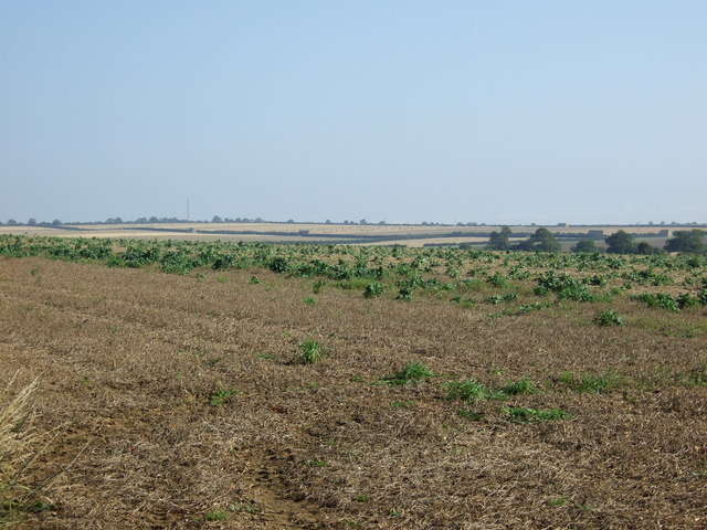 Crop field off Back Lane