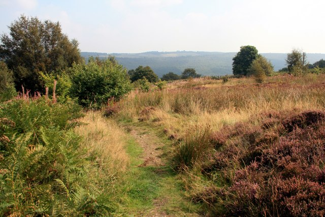 Townend Common Local Nature Reserve