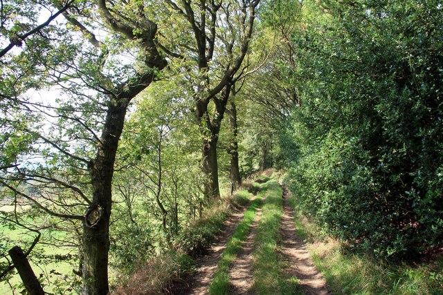 Footpath track on Hollin Edge