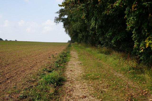 Farm track towards College Farm