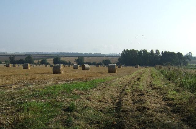 Farm track off Back Lane