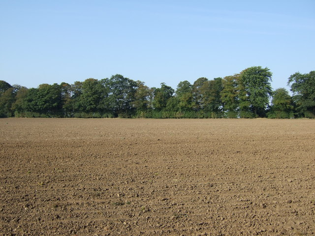Field towards Crow Wood