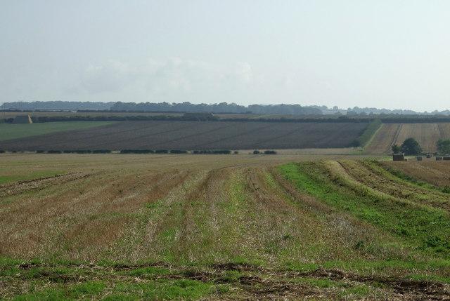 Fields off Back Lane