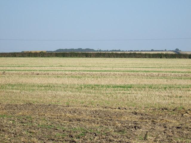 Stubble field off Back Lane