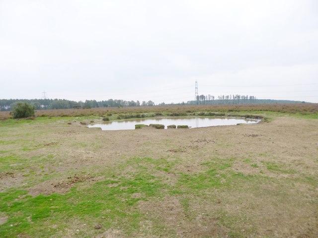 Hale Purlieu, pond