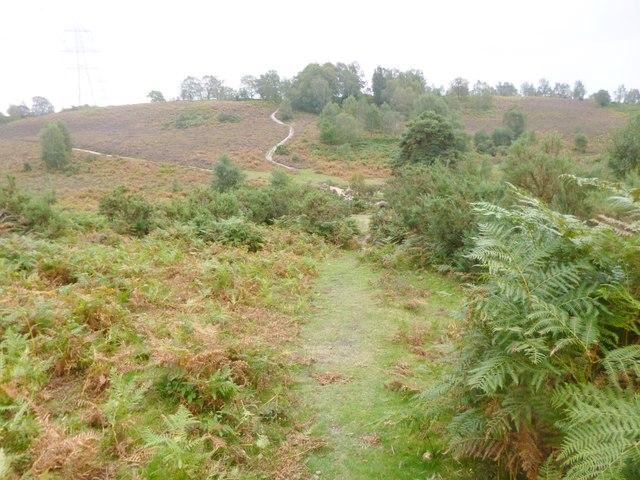 Hale Purlieu, track