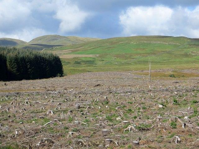 Clear felled area near Kinnelhead