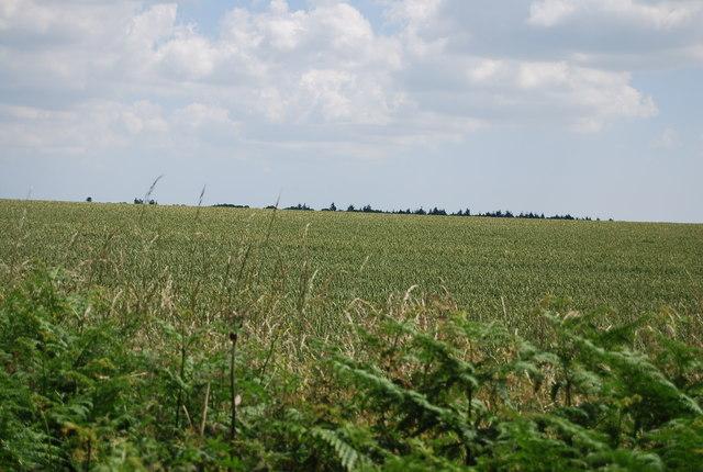 Farmland by Coxhall Rd