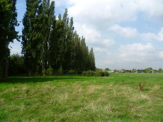 Line of poplars in Long Lane Recreation Ground