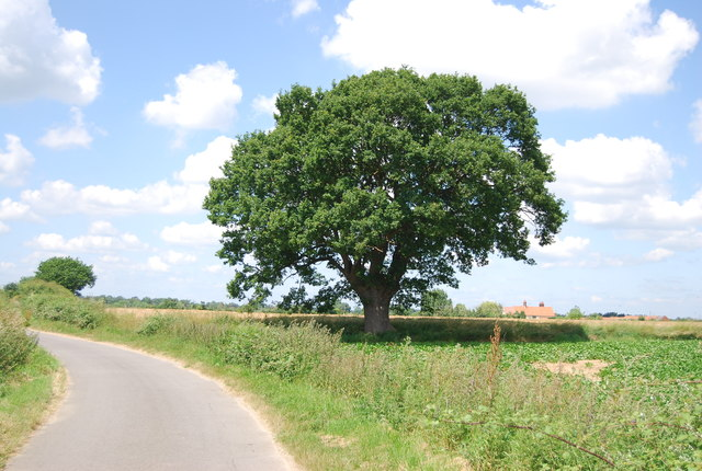 Tree by Coxhall Rd