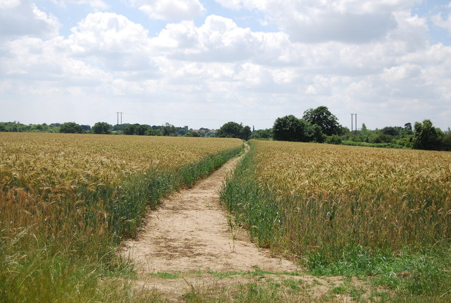 Footpath through barley