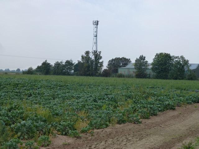 Telecommunication mast near Furston Lodge, Gosberton