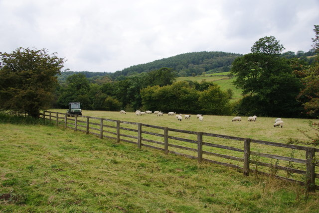 A field of sheep in the Murk Esk valley