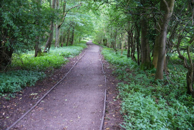 Path in Buber Wood