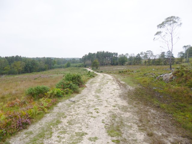Millersford Copse, forestry road