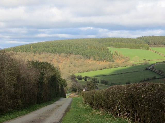 Woodland above Clun
