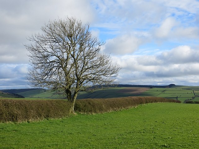 Tree on Clun Hill