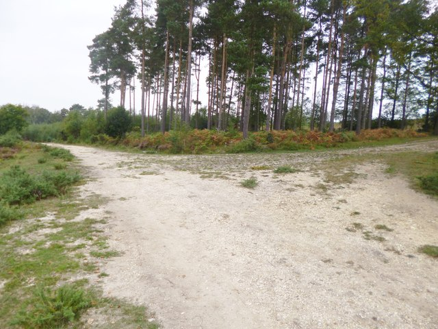 Millersford Copse, forestry road junction