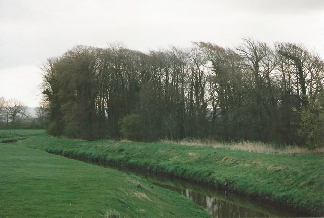 River Cocker