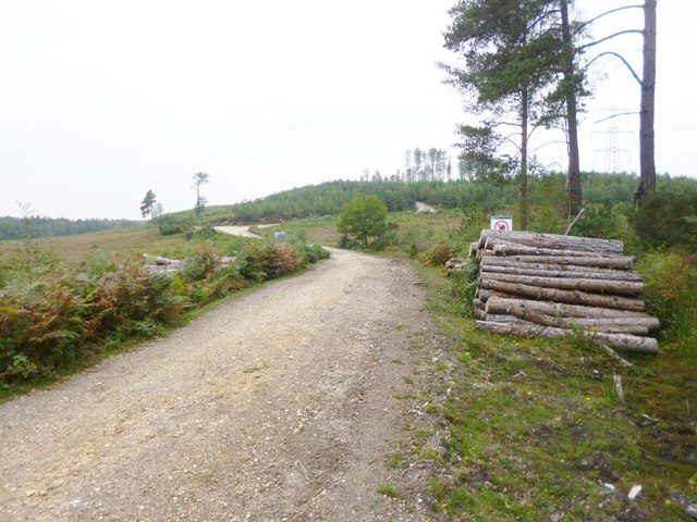 Millersford Plantation, timber