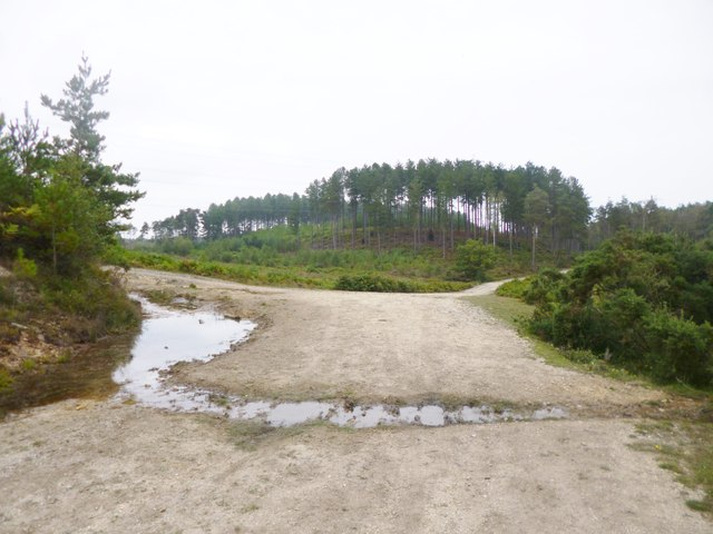 Millersford Plantation, forestry road junction