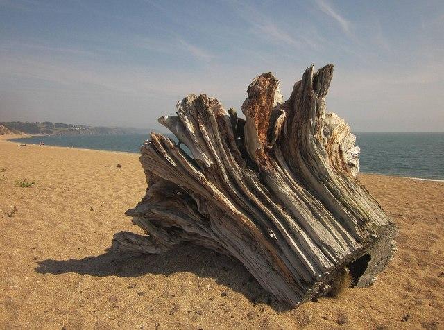 Driftwood, Slapton Sands