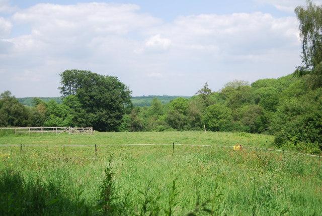 Field near Salmon Wood