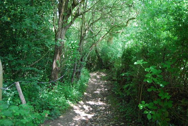 Footpath in Salmon Wood